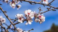 Le printemps, saison du renouveau et de l'énergie retrouvée